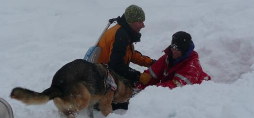 Ma tres chiens d avalanche en montagne votre s curit for Mca haute savoie